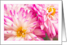 Two White And Pink Dahlias Blank Card