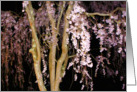 Pink Blossoms Cascading In The Night card