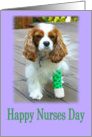 Happy Nurses Day With A Cavalier King Charles Spaniel Patient card