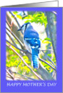 Blue Jay Sitting On A Branch Mother's Day Card