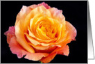 The Orange Rose Love Like Ours Card