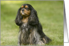 A Friend Like You Cavalier King Charles Spaniel card