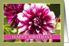 Happy Birthday Purple Passion Dahlia card
