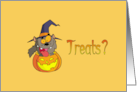 Halloween Treats Crazy Cat Card