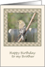 Finch on a Branch Birthday Card for Brother card