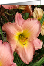 Happy Birthday Sister - Pink Daylilies Birthday Card for Sister card