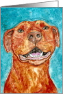 Congratulations American Red Nose Pit Bull Terrier Dog card