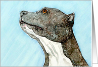 Blue Nose Pit Bull Terrier Canine Dog Blank Note Card