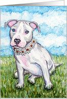 White Daisy Pit Bull Terrier Puppy Dog Blank Note Card