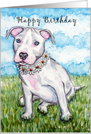 White Daisy Pit Bull Terrier Puppy Dog Happy Birthday card