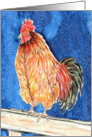 Rooster Chicken Fowl Farm Bird Animal Blank Note Card