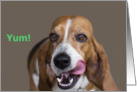 Basset Hound Focus for a Cause, Birthday, Yum! card