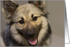 Focus for a Cause, Keeshond, Birthday Card