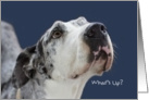 What's Up, Great Dane, Birthday Card, Focus for a Cause card