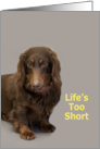 Dachshund Birthday Card, Life's too short! By Focus for a Cause card