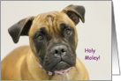 Holy Moley Boxer Birthday Card, Boxer Dog Birthday Card, Focus for a Cause card