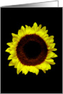 Sunflower Portrait. card