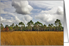 Florida Prairie Sedge Grass & Pine . card