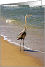 Great Blue Heron on the Surf. card
