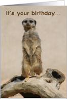 Go Nuts Funny Meerkat Birthday Card