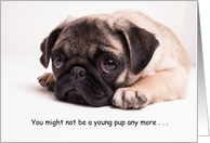 Birthday Cards For The Dog Lover And From