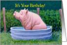 Pig in Water Enjoying His Birthday! card
