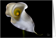 Calla Lily Blank Note Card