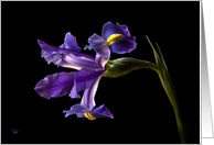 Purple Iris Blank Note Card