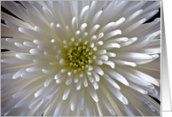 Chrysanthemum Blank Note Card