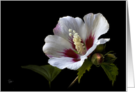 Rose of Sharon Blank Note Card