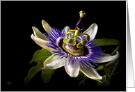 Passion Flower Blank Note Card
