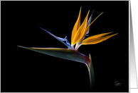 Bird of Paradise Blank Note Card