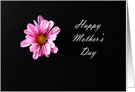 Mother's day card with a single Chrysanthemum flower card