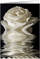 Silver Anniversary Rose Flood card