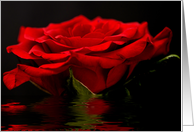 Red Rose Flood Photography Blank Note Card