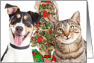 Dog and Cat Happy Holidays Card