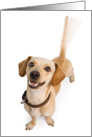 Tail-Wagging Dog Thank You Card