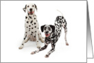 Dalmatian Dogs With Heart Shaped Spots - Valentines Card