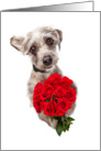 Cute Dog Delivering Valentine's Day Roses card