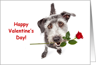 Terrier Dog Delivering Valentine's Day Rose card