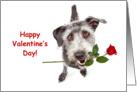 Terrier Dog Delivering Valentine's Day Rose card